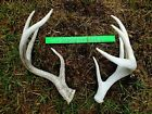 Giant 5x4 Whitetail Deer Antler Sheds Rack Craft Rattling Horns Taxidermy