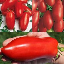 30pcs Seltene Tomate Saatgut Samen Gemüse Tomaten Sämereien Garten Deko