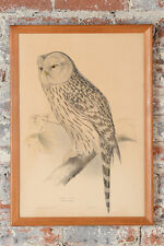 """John Gould """"Ural Owl"""" The birds of Europe c.1830 Hand colored Lithograph"""