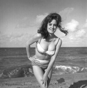 Bunny Yeager 1966 Pin-up Camera Negative Photograph Bathing Beauty Shawn O'Shea