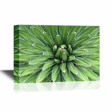 wall26 - Floral Canvas Wall Art - Sharp Pointed Agave Plant Leaves - 12x18
