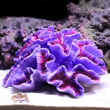 Simulation Korallenriff Lila Blume Künstliche Pflanze Aquarium Ornament DIY Deko