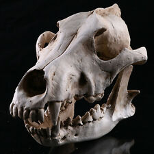 Resin Snow wolf Animal Head Skull Replica Halloween Ornament Statue Model White