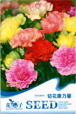 New Fsahion HOT Flower Seed Carnation Herb Seed Home Garden Plant Popular