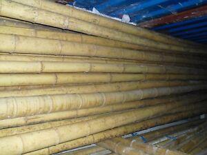 Bambusstangen Bambus Bambusrohre Bambuslatte Bambushalm 10 Stk. 3 m Ø 8-10 cm