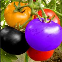 100 PCS Seeds Rare Rainbow Tomatoes Bonsai Plants Ornamental Organic Vegetables