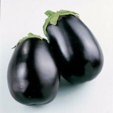 VEGETABLE  AUBERGINE  EGG PLANT  BLACK BEAUTY 500 SEEDS