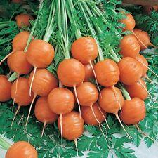 Seeds Sweet Carrot Paris Market Red Organic Heirloom Russian Ukraine