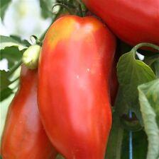 graines de tomate ondine cornu vendu en sachet de 30 graines