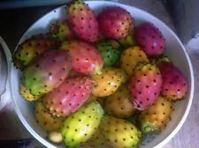 75+ FRESH Prickly pear / Opuntia Ficus Indica seeds Red variety
