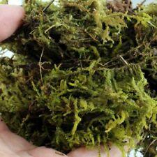 Natural Terrarium Moss Reptile Turtle Substrate Habitat Decoration Pet Supplies