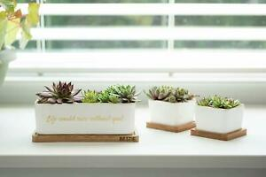 New set of 3 decorative succulent planter ceramic golden trim White cactus pot