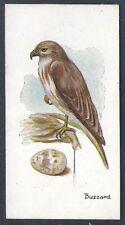 LAMBERT & BUTLER-BIRDS & EGGS-#38- BUZZARD