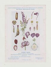 FICHE N°1  PLANTE MEDICINALE/COMITE INTERMINISTERIEL-ACONIT NAPEL/Ed.Montaudon