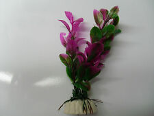 plante bicouleur