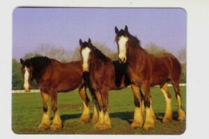 Beautiful Clydesdale Horses in Pasture -- Modern Wide Swap Playing Card