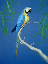 Original Pastel Drawing Blue & Gold Macaw Parrot Bird Wildlife Art Porter Family