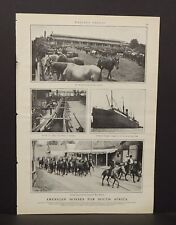 Harper's Weekly Single Pg American Horses For South Africa  c.1890s B11#69
