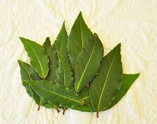 20 feuilles Laurier fraiches -  bouquet garni