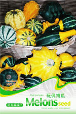 Original Package 10 Doll Pumpkin Seeds Ornamental Cucurbita Vegetable Seed B012