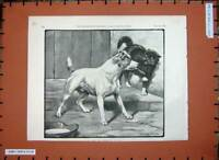 Original Old Antique Print 1891 Fannie Moody Fine Art Dog Cat Animals Pets Bowl