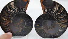 "Rare 1 in 100 Black Pair Ammonite Crystal Large 84mm Dinosaur Fossil 3.3"" n2140"