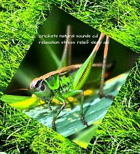 1 CD x NATURAL SOUND OF CRICKETS W CD: RELAXATION MEDITATION STRESS AID SLEEP