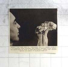 1955 Dr Eh Colbert Holding Fine Fossil Head Of Tritylodont