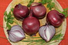 Zwiebel- Rote Herbstzwiebel   - 80 Samen