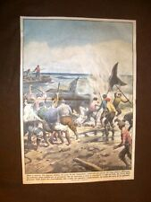 Retrocopertina Domenica del Corriere 1933 Enorme delfino a Capo Peloro Messina
