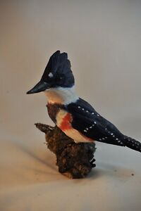 Belted Kingfisher full size Wood Carving /Sculpture
