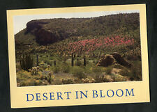 C2000 View of Desert in Bloom, Arizona, USA