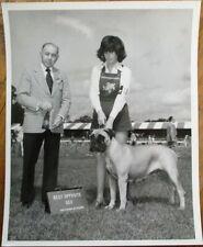 Bullmastif / Mastiff 1976 Champion Dog Show 8 x 10 Photograph / Photo