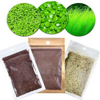 Aquarium Grassamen Decor Wasserpflanze Pflanzen Samen Aquatic Aussaat Seed K3D4
