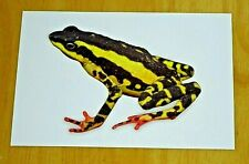 FROG POSTCARD ~ ATEOLOPUS TRICOLOR - THREE-COLOURED HARLEQUIN TOAD - BOULENGER