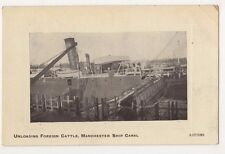 Manchester Ship Canal, Unloading Foreign Cattle Postcard, B595
