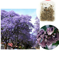 100XLot Fastest Growing Royal Empress Tree Purple Paulownia Tomentosa Seed