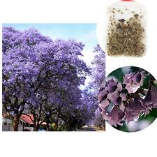100XLot Fastest Growing Royal Empress Tree Purple Paulownia Tomentosa Seed