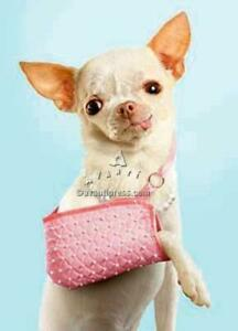 Get Well Greeting Card - Chihuahua in Sling