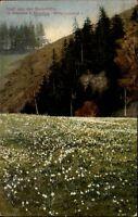 Bockmühle bei Ehrenberg Sachsen alte Postkarte 1920 gelaufen Partie im Polenztal