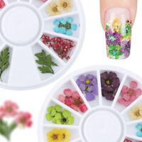 12 Color Real Dry Dried Flower Leaves Tips 3D Nail Art UV Gel Acrylic False Tips