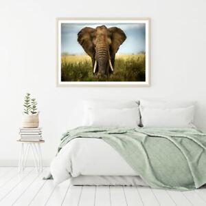 Elephant Portrait Photograph Print Premium Poster High Quality choose sizes