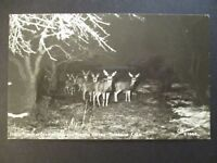 Mint Vintage Flash of Deer Durango Colorado Real Picture Postcard