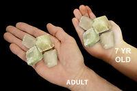 "Multicolor Green Calcite 1"" 4-7 Oz Set of 4 Rock Mineral Specimen Crystal Stone"
