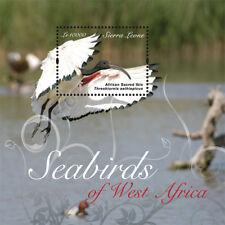 Sierra Leone - Seabirds of West Africa Stamp - Souvenir Sheet MNH