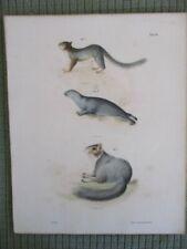 Vintage Print,Little Grey Squirrel,Mammals Natural History of Ny,1842