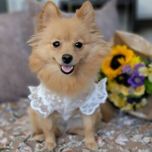 Spring/Summer Floral Lace Breathable Sun-Proof White Dress for Dog and Cat