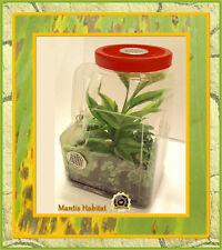 Praying Mantis Clear Plastic Ventilated Habitat - Convenient Handle Design