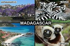 SOUVENIR FRIDGE MAGNET of MADAGASCAR