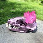 Real Skunk Skull W/ Real Pink Aura Crystal & Eyelashes. Metallic Purple Pink.